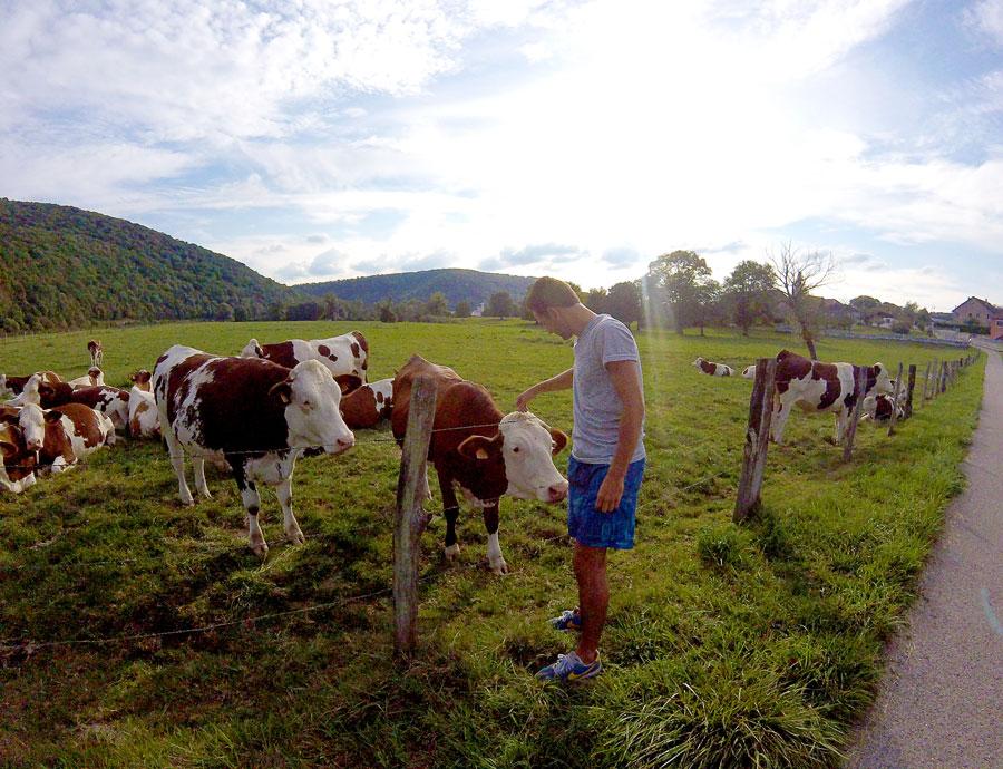 Arthur et les vaches