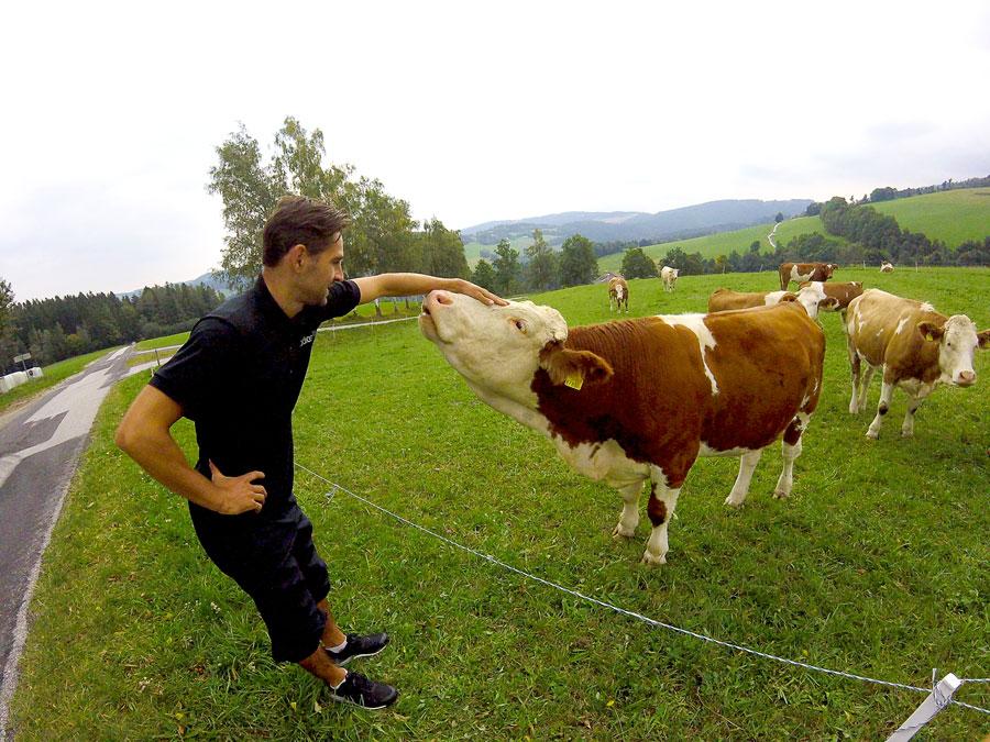 Arthur caresse une vache de la montagne autrichienne