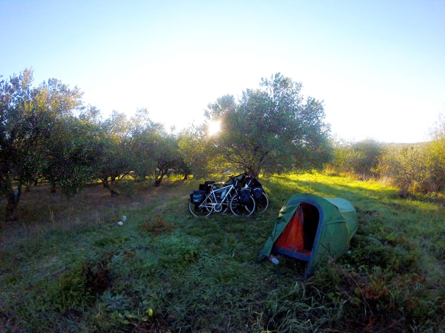 Tent in a field of olive groves in Vrpolje