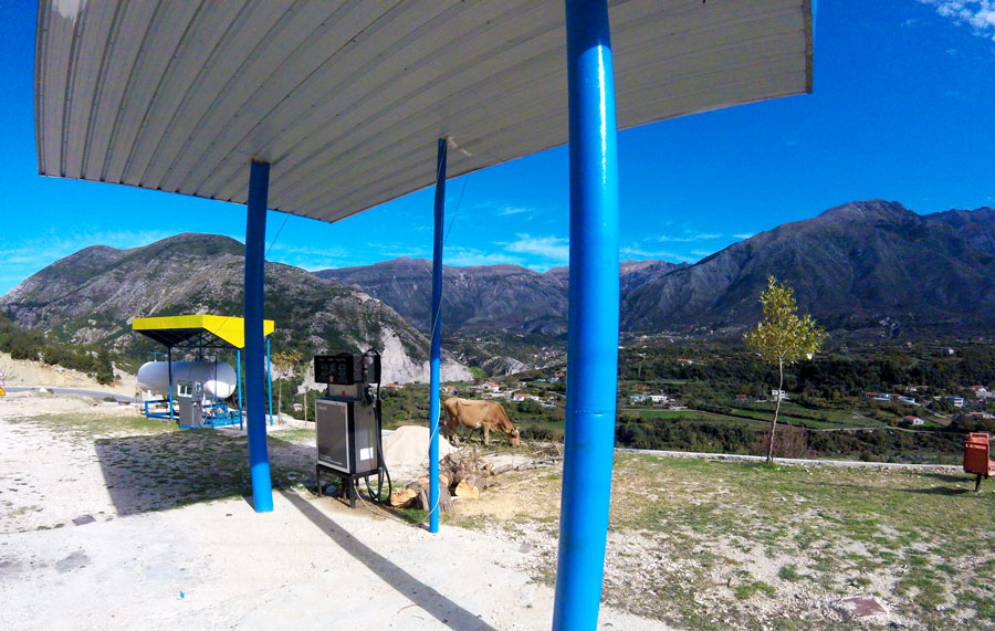 vache au bord de la route en Albanie