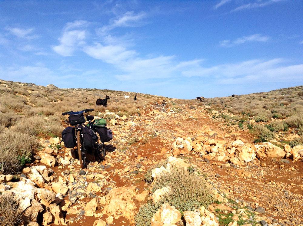 Brebis sur la route caillouteuse pour aller à Balos Bay en Crète