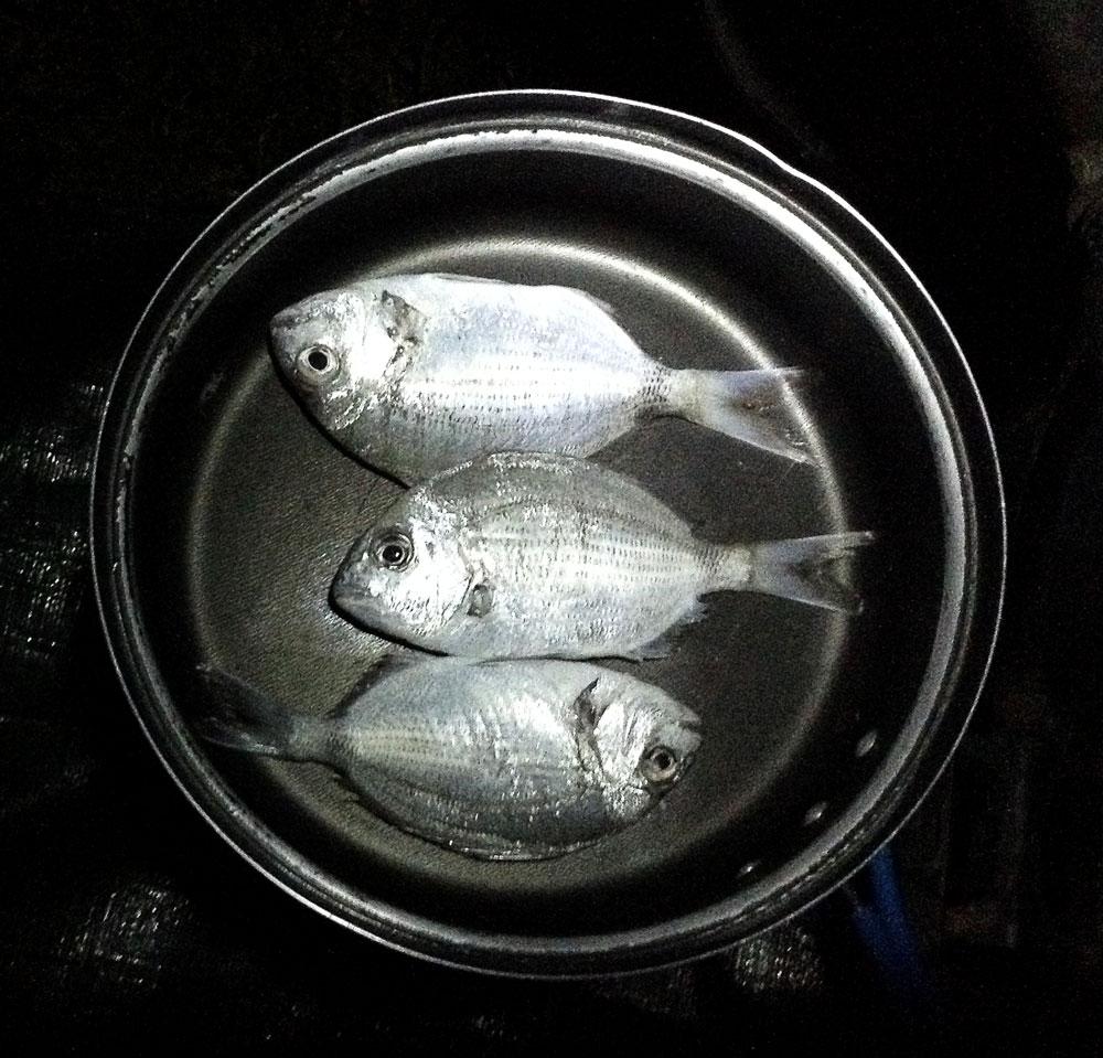 Trois petits poissons dans la popote de la pêche du jour