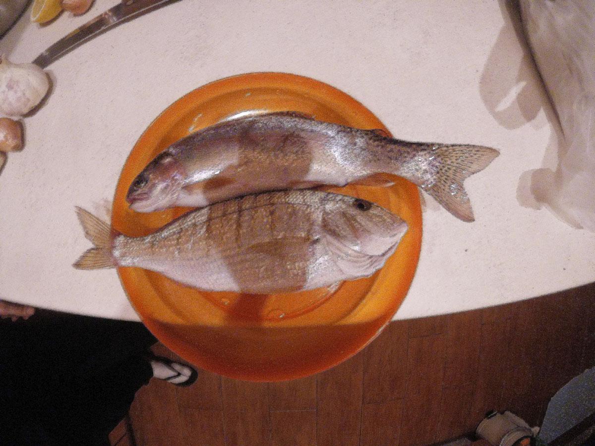 poissons pêchés à Kalyves par Arthur